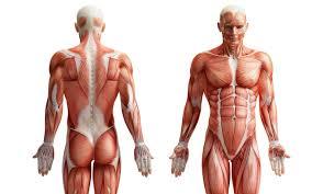 Anatomy Image